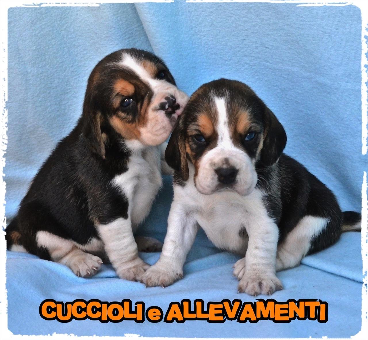 Beagle 4_wm