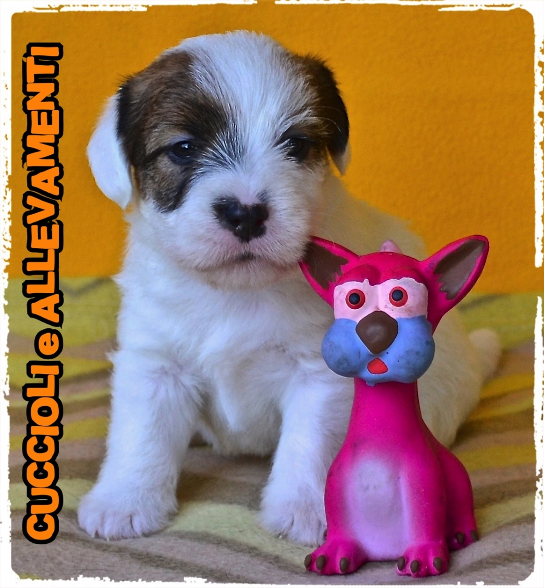 Jack Russell/Russel 21_wm