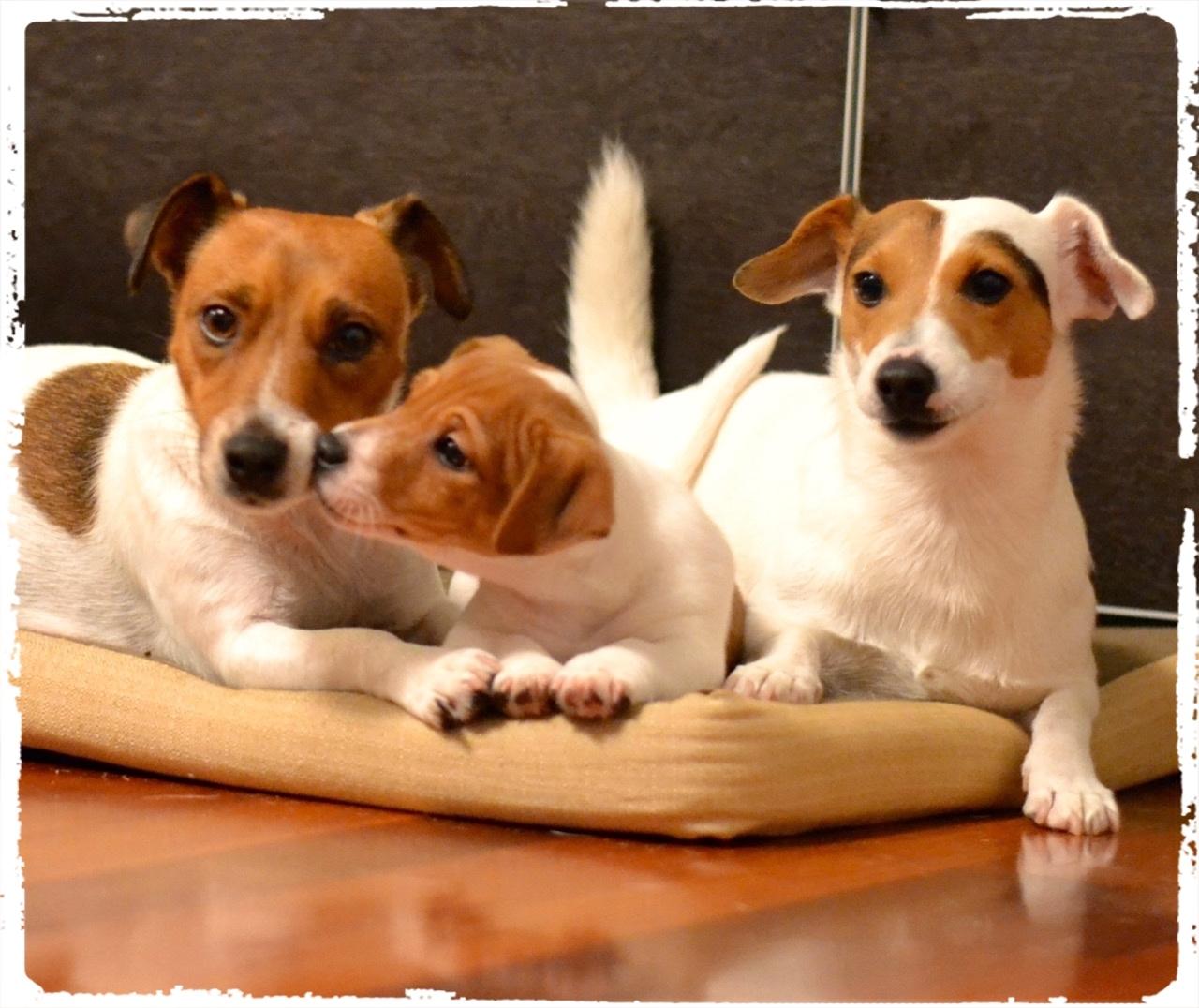 Cuccioli e Allevamenti 11
