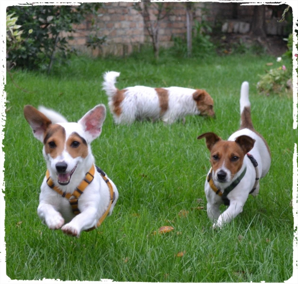 Cuccioli e Allevamenti 12