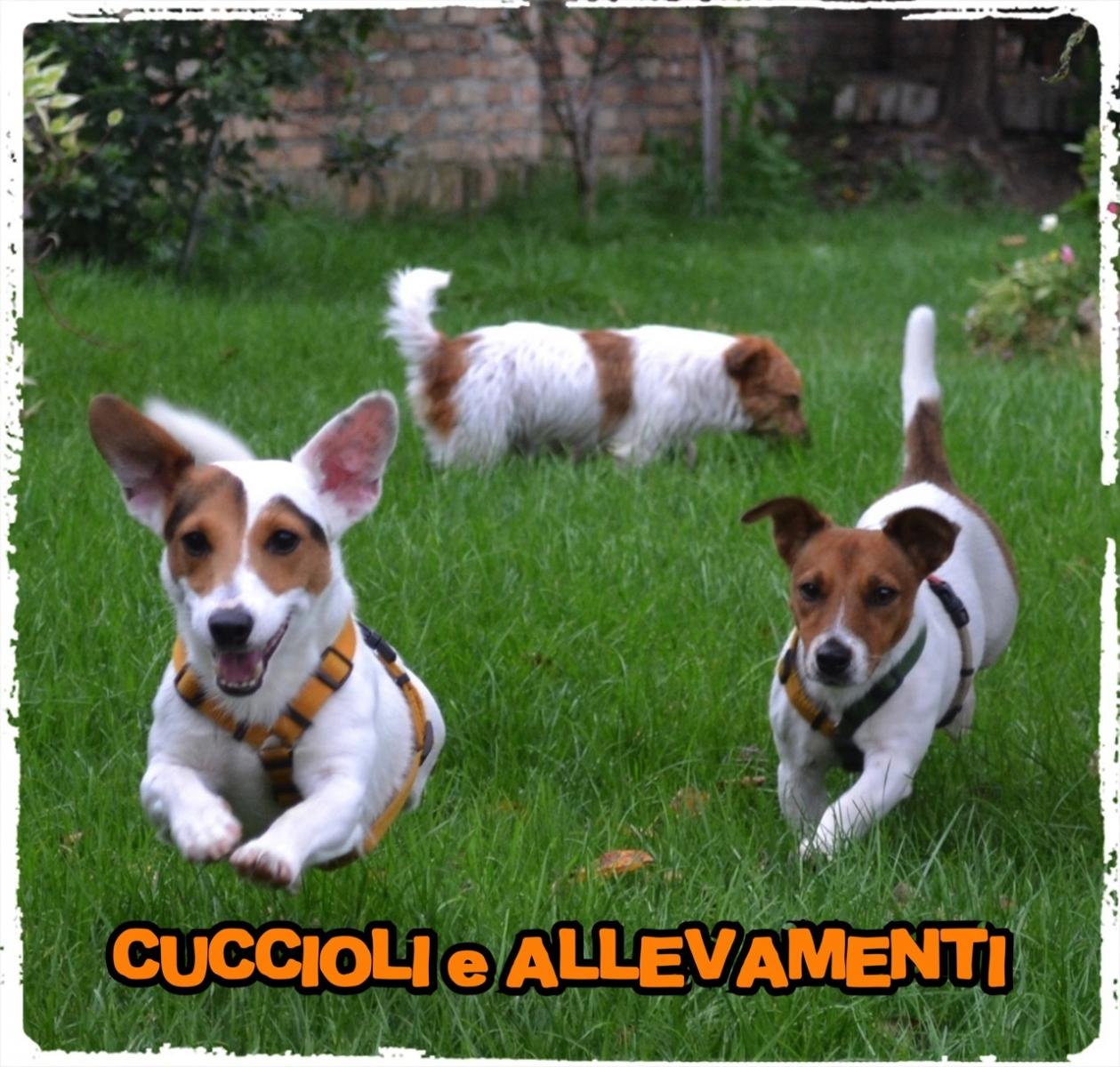 Cuccioli e Allevamenti 12_wm