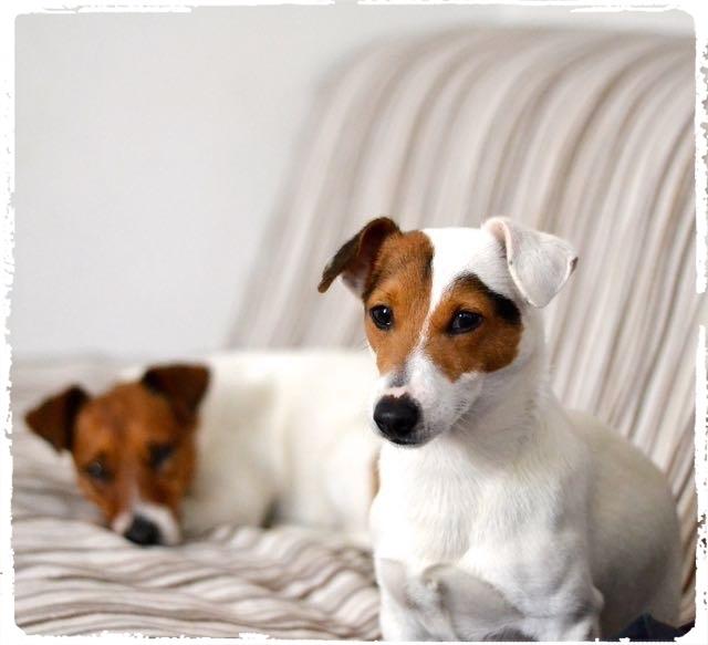 Cuccioli e Allevamenti 13
