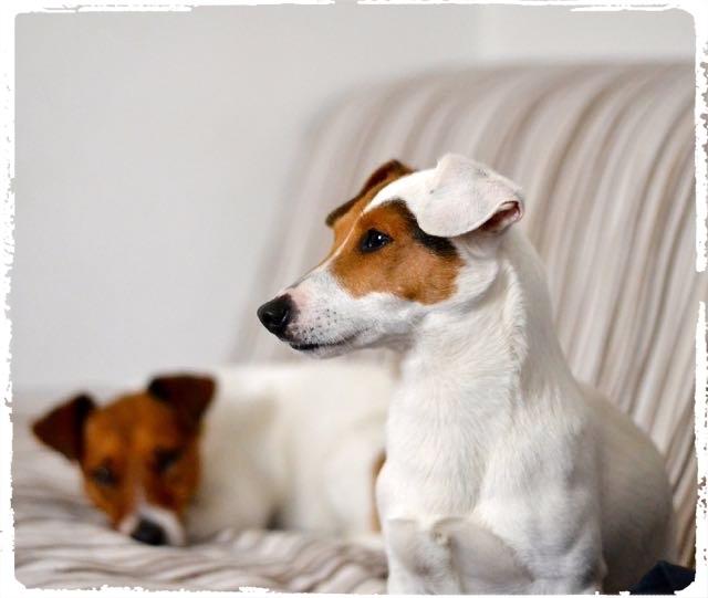 Cuccioli e Allevamenti 14