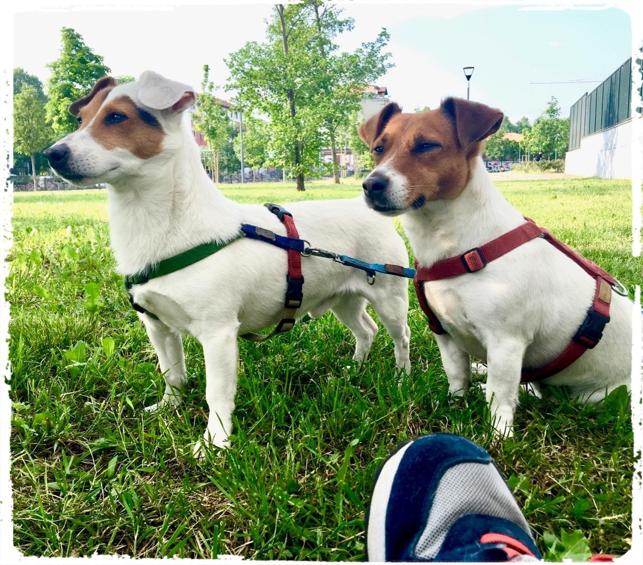 Cuccioli e Allevamenti 15