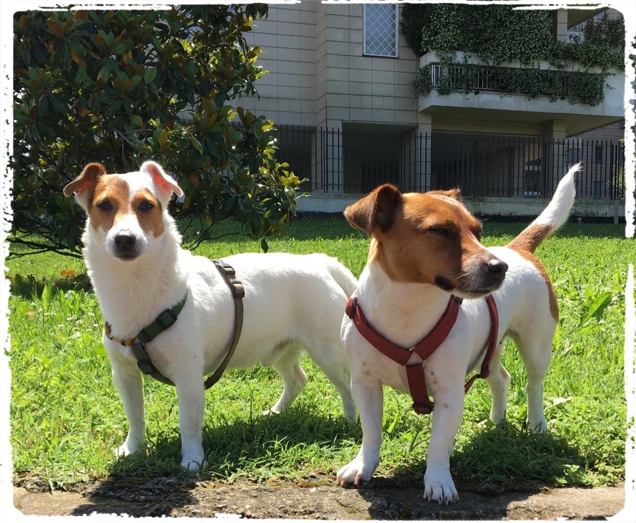 Cuccioli e Allevamenti 16