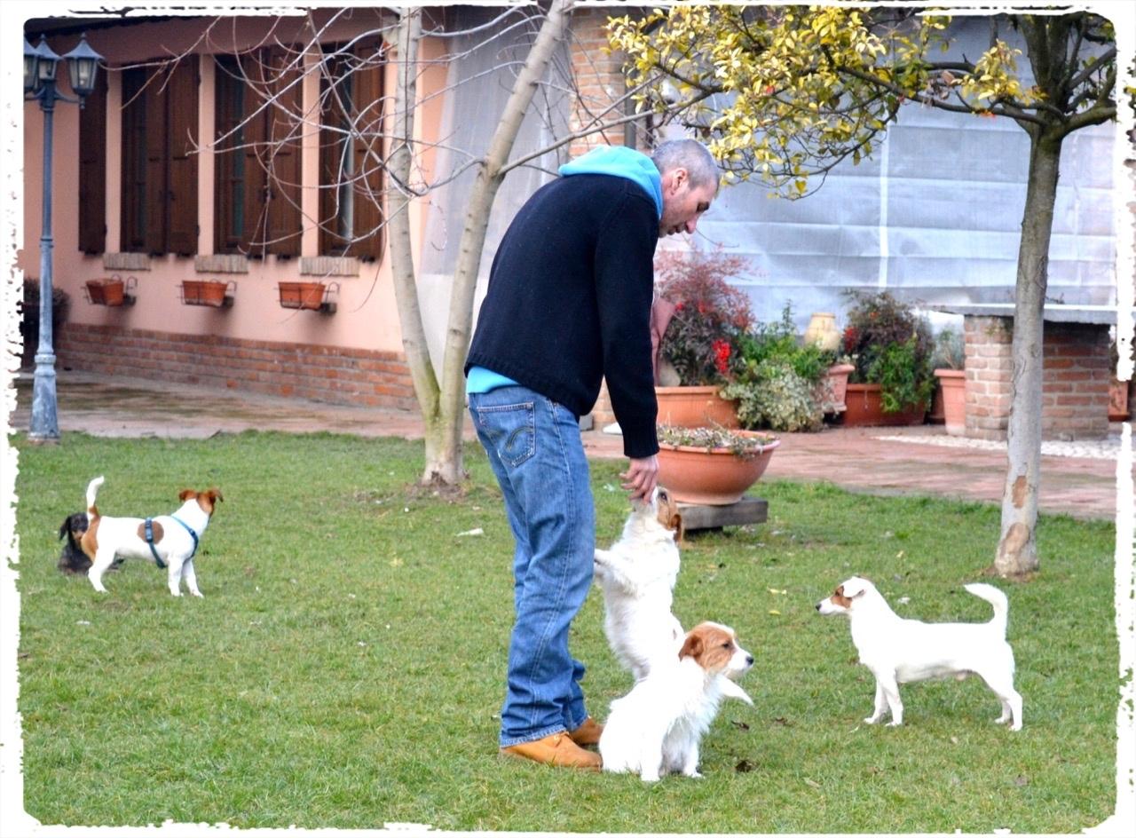 Cuccioli e Allevamenti 17