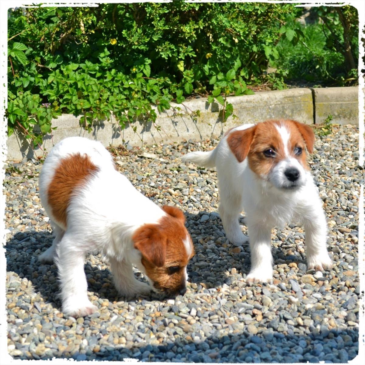 Cuccioli e Allevamenti 18