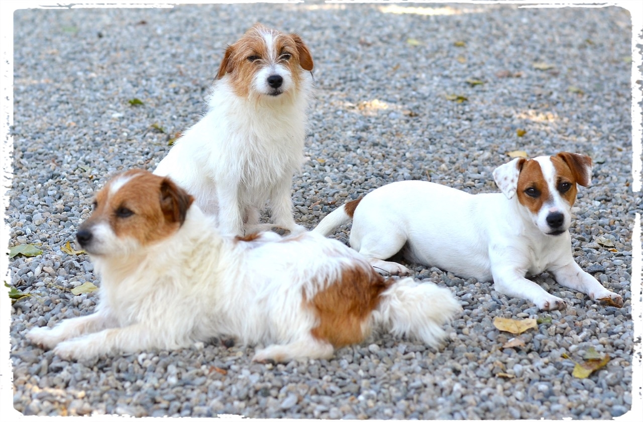Cuccioli e Allevamenti 19