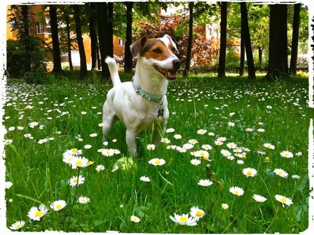Cuccioli e Allevamenti 6-1