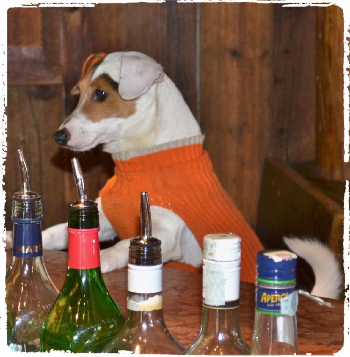Cuccioli e Allevamenti 8