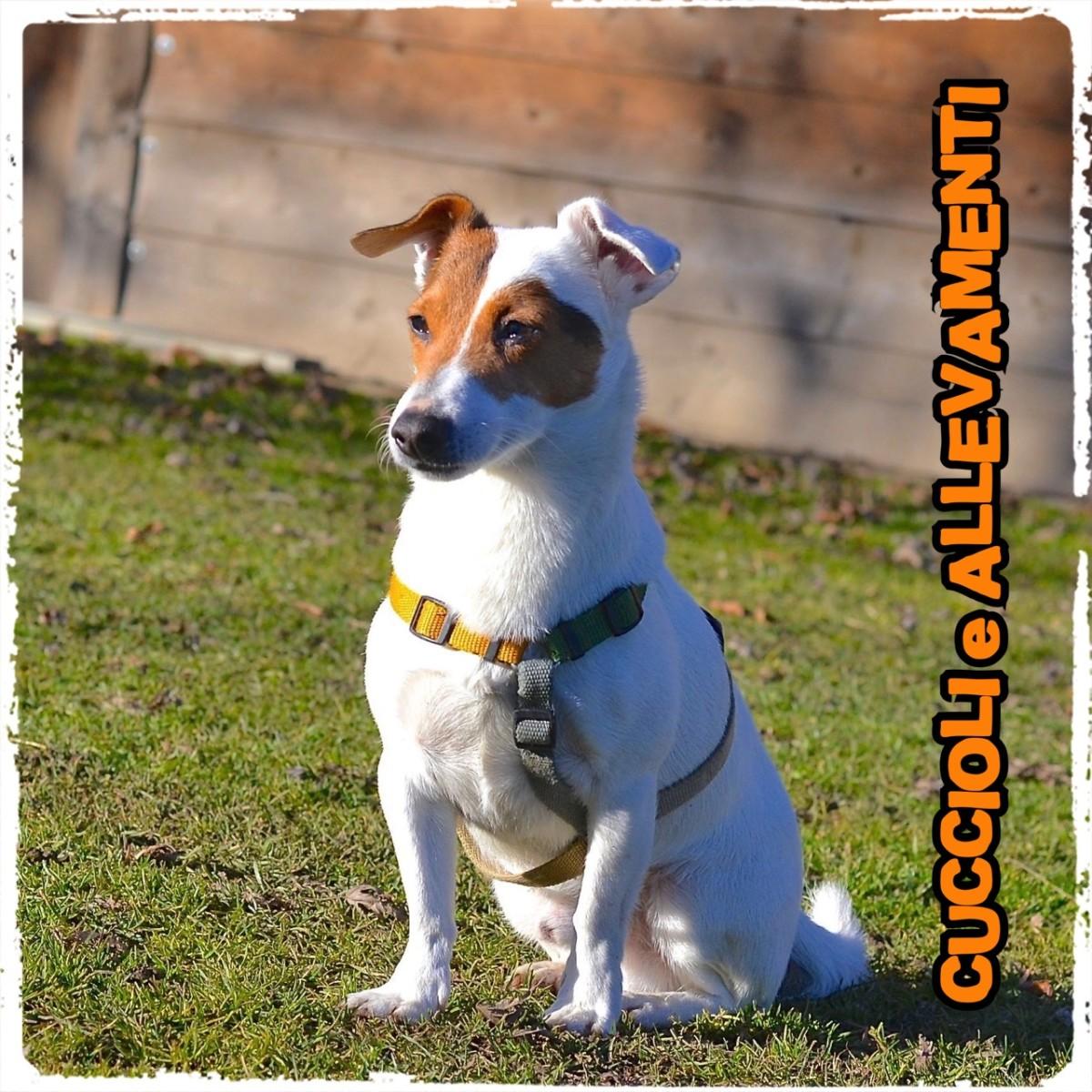Educazione del cane – Comandare o meglio chiedere !?
