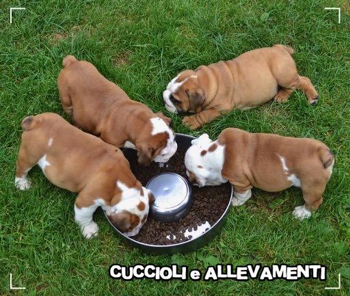 L'alimentazione dei cani – alcune considerazioni da tenere presente