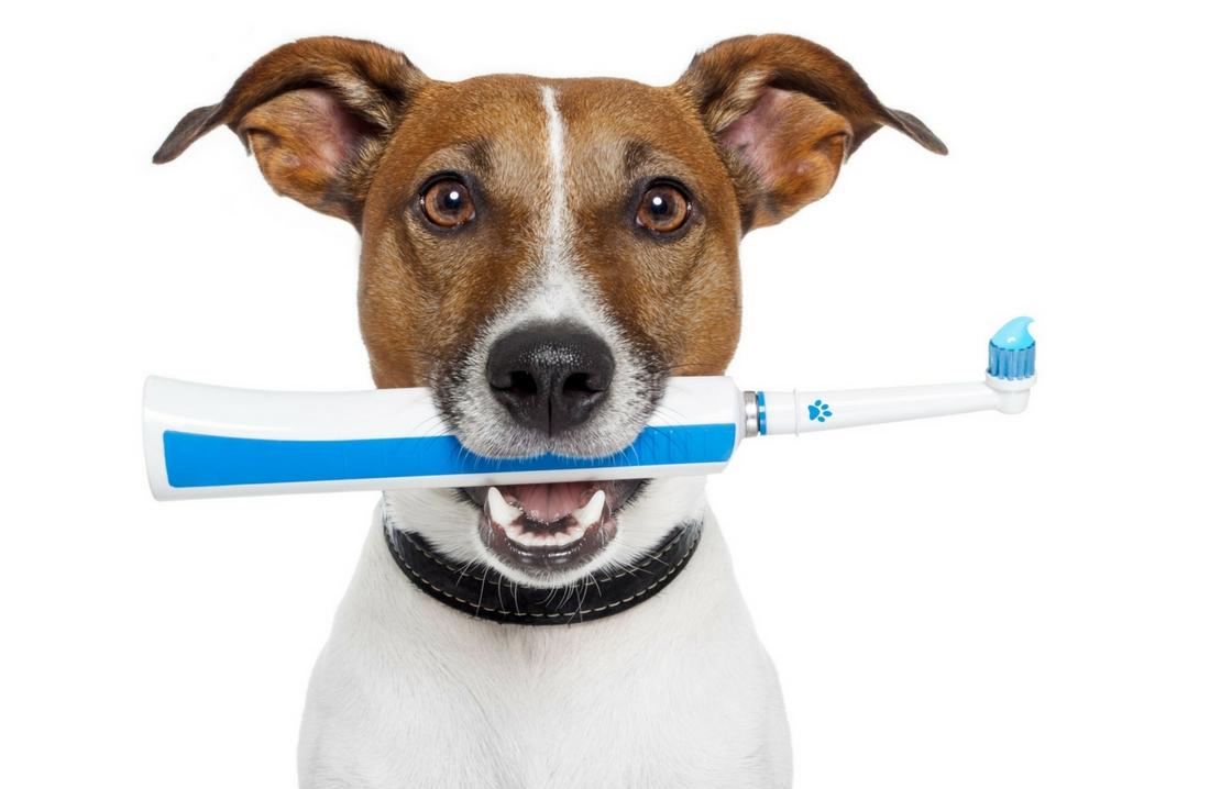 L'igiene orale del cane