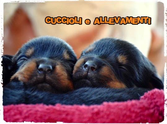 Comportamento dei cani – Le differenze comportamentali delle razze canine