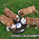 Cuccioli e la loro Educazione