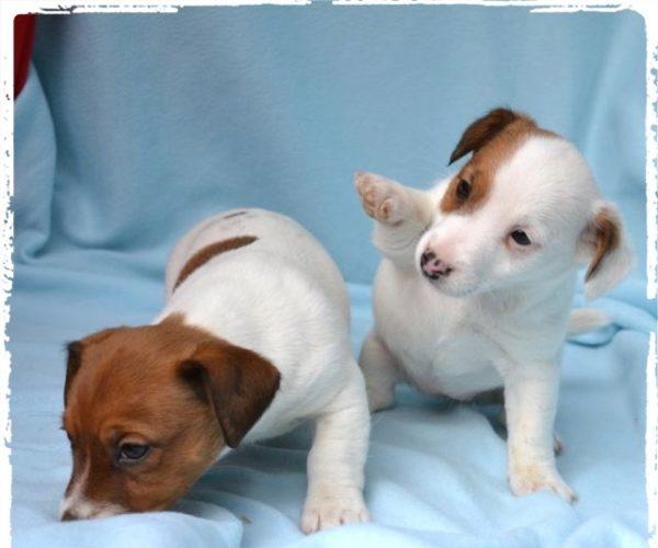 Educazione del Cucciolo – Il Guinzaglio, Il Galateo, l'importanza del rinforzo positivo