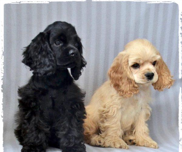 Scegliere un cucciolo, meglio Maschio o Femmina ?! – Alcune considerazioni